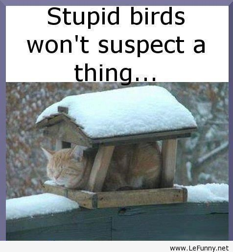 Stupid Birds Won't Suspect A Thing