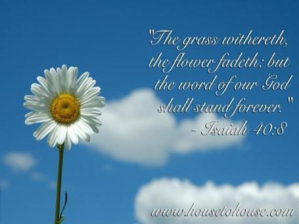 """ The Grass Withereth, The Flower Fadeth, But The Word Of Our God Shall Stand Forever "" ~ Bible Quotes"