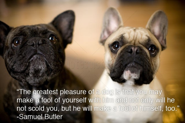 """""""The Greatest Pleasure Of A Dog Is That You May Make Fool Of Yourself With Him And Not Only Will He Scold You, But He Will Make A Fool Of Himself, Too"""""""