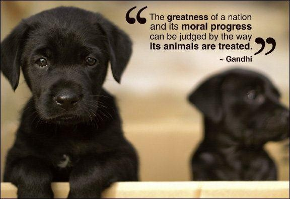 """The Greatness Of A Nation And Its Moral Progress Can Be Judged By The Way Its Animals Are Treated""- Gandhi"