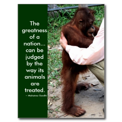 The Greatness Of A Nation, Can Be Judged By The Way Its Animals Are Treated - Mahatma Gandhi