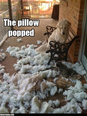 The Pillow Popped