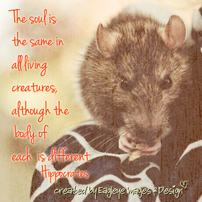 The Soul Is The Same In All Living Creatures, Although The Body Of Each Is Different Hippocrates