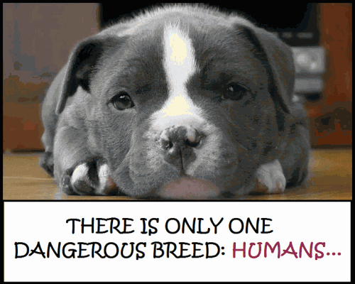 There Is Only One Dangerous Breed, Humans