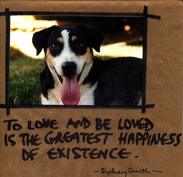 Love Animal Quotes: Animal Quotes Pictures And Animal Quotes Images With