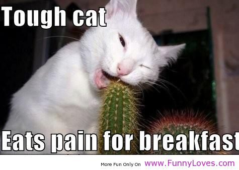 Tough Cat Eats Pain For Breakfast Funny Animal Quote