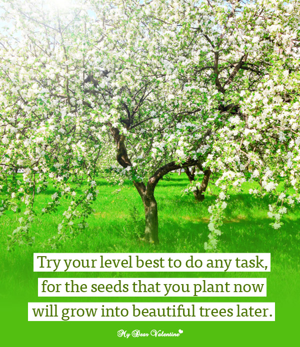 Try Your Level Best To Do Any Task, For The Seeds That You Plant Now Will Grow Into Beautiful Trees Later