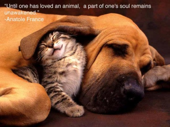 Until One Has Loved An Animal A Part Of One's Soul Remains Unawakened - Anatole France