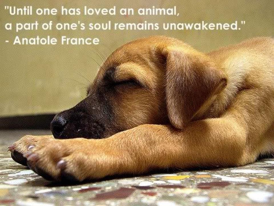 """""""Until One Has Loved An Animal, A Part Of One's Sould Remains Unawakened"""" - Anatole France"""