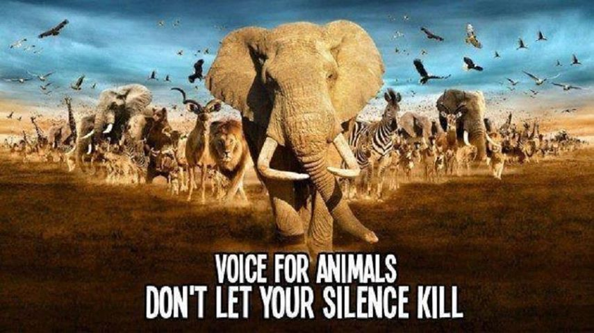Voice For Animals Don't Let Your Silence Kill