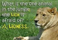 What Is The One Animal In The Jungle The Lion Is Afraid Of A Lioness