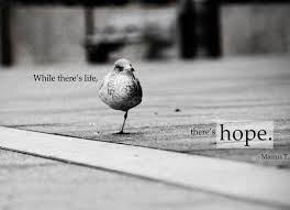Where There Is Life, There's Hope