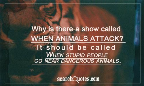 Why Is There A Show Called When Animals Attack! It Should Be Called When Stupid People Go Near Dangerous Animals