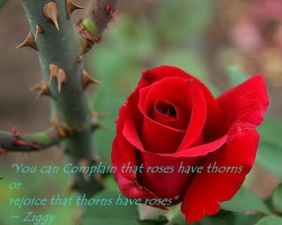 """"""" You Can Complain That Roses Have Thorns Of Rejoice That Thorns Have Roses """" - Ziggy"""