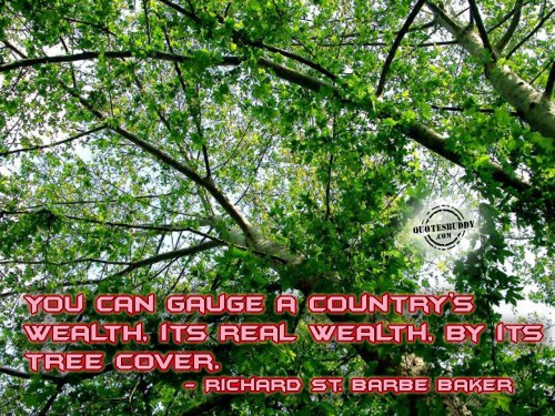 You Can Gauge A Country's Wealth, Its Real Wealth, By Its Tree Cover.