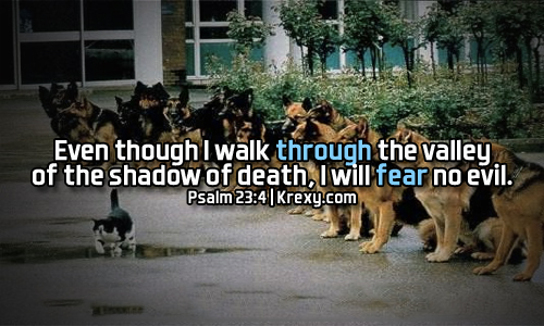 Even Though I Walk Through The Valley Of The Shadow Of Death I Will Beauteous Bible Death Quotes