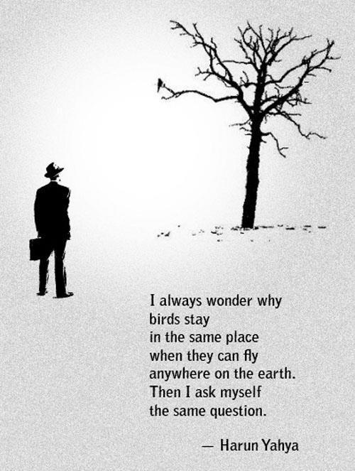 Birds Quotes Images, Sayings About Birdwatchers Pictures ...