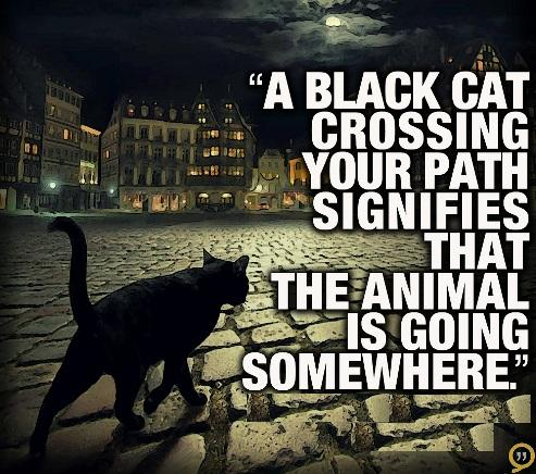 """"""" A Black Cat Crossing Your Path Signifies That The Animal Is Going Somewhere """""""