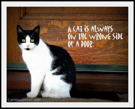 A Cat Is Always On The Wrong Side Of A Door.