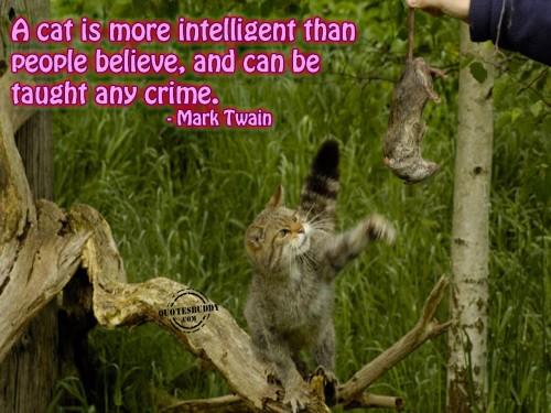 A Cat Is More Intelligent Than People Believe, And Can Be Taught Any Crime. - Mark Twain