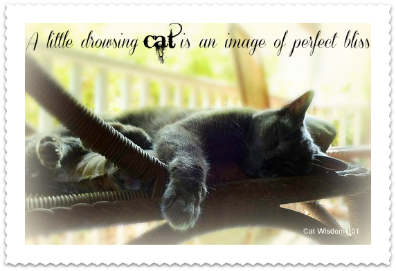 A Little Drowsing Cat Is An Image Of Perfect Bliss.