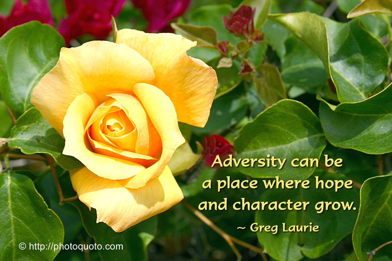 Adversity Can Be A Place Where Hope And Character Grow. - Greg Laurie