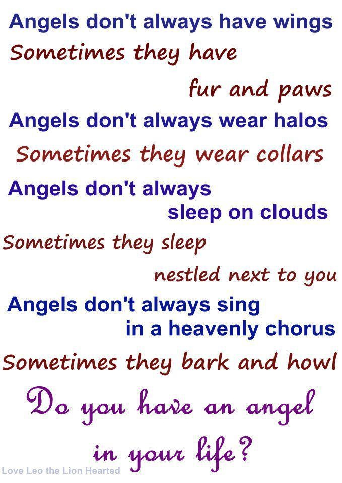 Angels Don't Always Have Wings Sometimes They Have Fur And Paws Angels Don't Always Wear Halos…