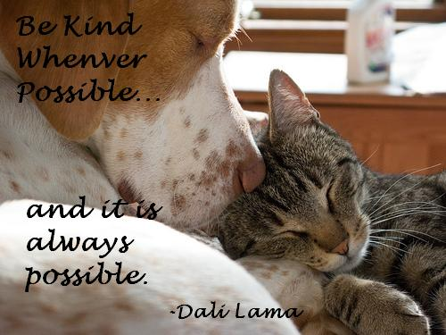 Be Kind Whenever Possible And It Is Always Possible. - Dali Lama ~ Cat Quote