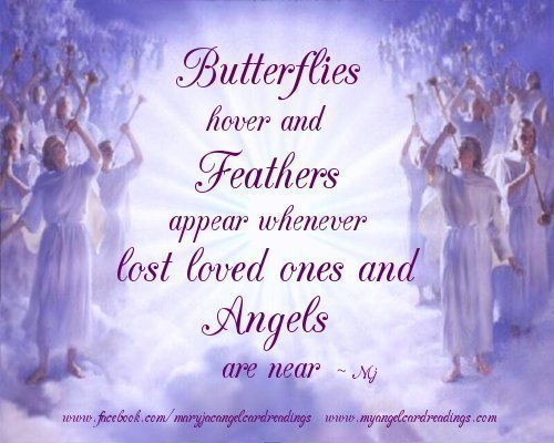 Butterflies Hover And Feathers Appear Whenever Lost Loved Ones And Angels Are Near
