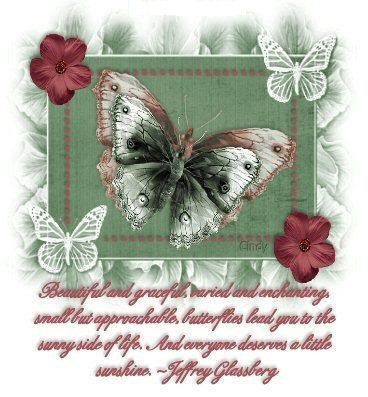 Butterfly Quotes…