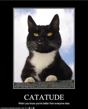 Catatude, When You Know You're Better Then Everyone Else.