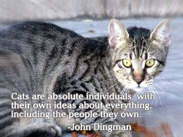 Cats Are Absolute Individuals, With Their Own Ideas About Everything, Including The People They Own. - John Dingman