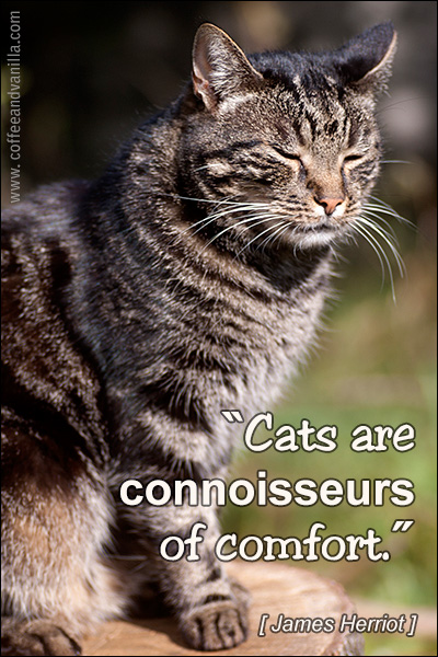""" Cats Are Connoisseurs Of Comfort "" - James Herriot"