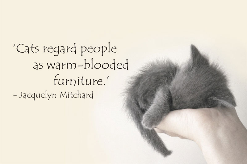 """"""" Cats Regard People As Warm-Blooded Furniture """" - Jacquelyn Mitchard"""