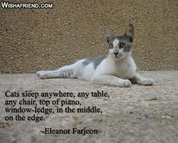 Cats Sleep Anywhere, Any Table, Any Chair, Top Of Piano, Window-Ledge, In The Middle On The Edge. - Eleanor Farjeon