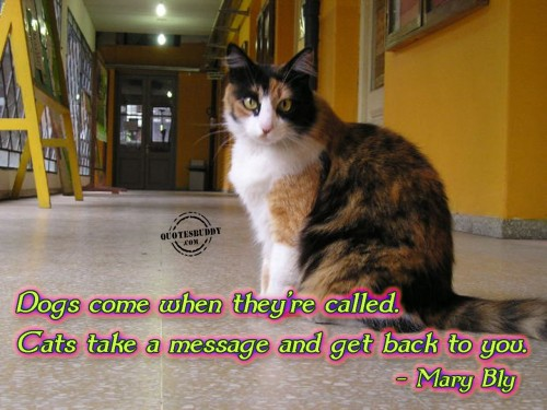 Dogs Come When They're Called. Cats Take A Message And Get Back To You. - Mary Bly