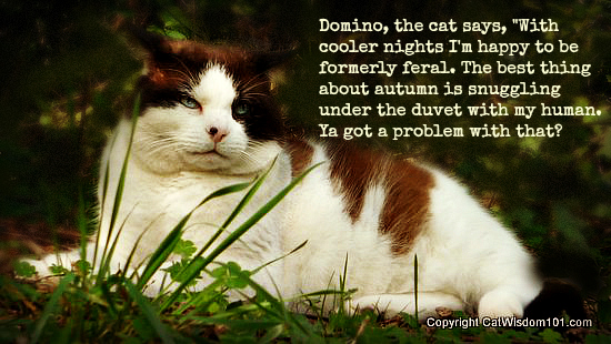 Domino, The Cat Says, With Cooler Nights I'm Happy To Be Formerly Feral….