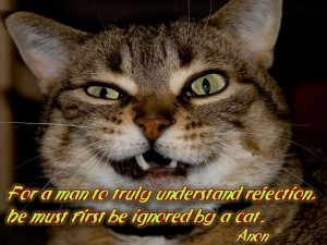 For A Man To Truly Understand Rejection. Be Must First Be Ignored By A Cat. - Anon