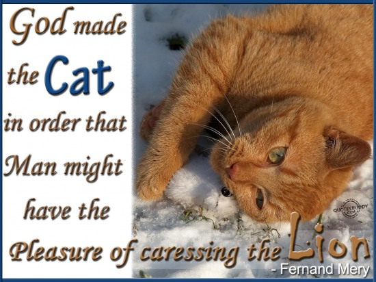 God Made The Cat In Order That Man Might Have The Pleasure Of Caressing The Lion. - Fernand Mery