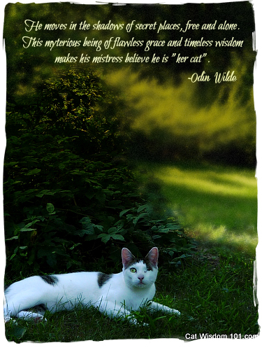 He Moves In The Shadows Of Secret Places, Free And Alone…. ~ Cat Quotes