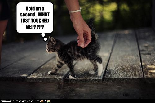 Hold On A Second, What Just Touched Me. ~ Cats Quotes