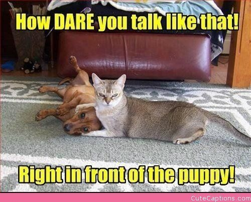How Dare You Talk Like That Right In Front Of The Puppy. ~ Cat Quotes