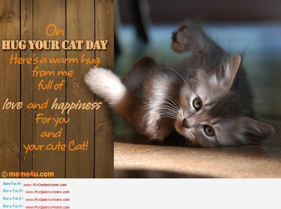Hug Your Cat Day..