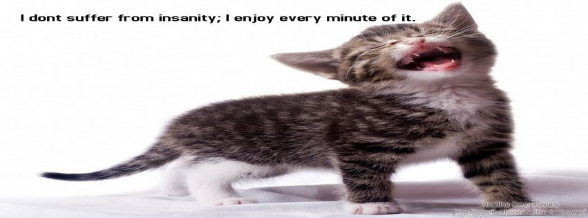 I Don't Suffer From Insanity, I Enjoy Every Minute Of It. ~ Cat Quotes