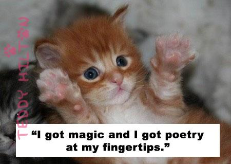""" I Got Magic And I Got Poetry At My Fingertips "" ~ Cat Quote"
