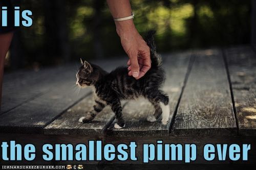 I Is The Smallest Pimp Ever. ~ Cats Quotes