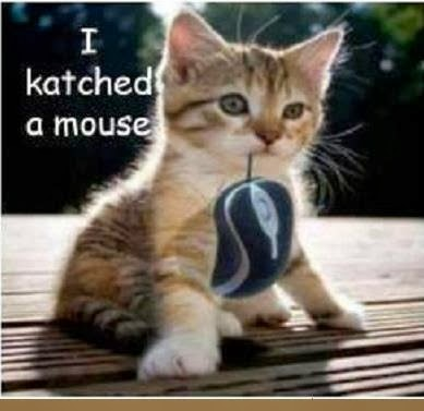 I Katched A Mouse. ~ Cat Quotes