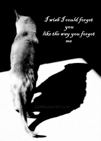 I Wish I Could Forget You Like The Way You Forget Me. ~ Cat Quotes