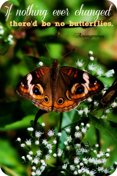 If Nothing Ever Changed There'd Be No Butterflies. - Anonymous