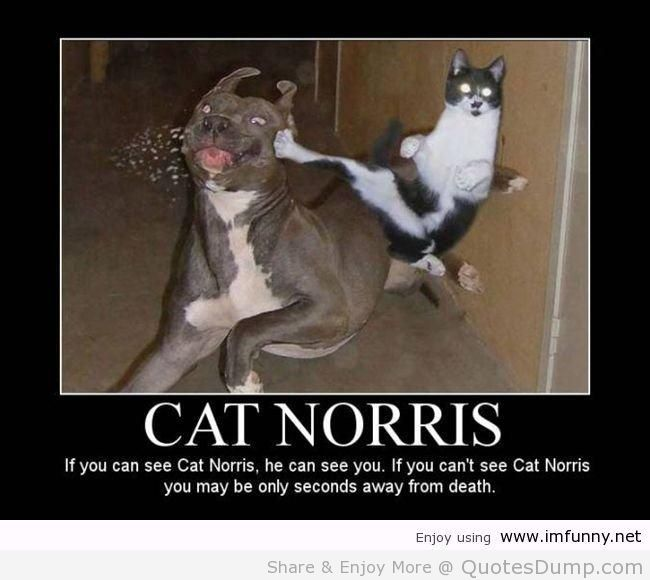 If You Can See Cat Norris, He Can See You. If You Can't See Cat Norris You May Be Only Seconds Away From Death.